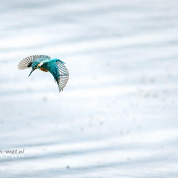 Ijsvogel & kwikstaart bij de poelruiterhut – Leven-Met…